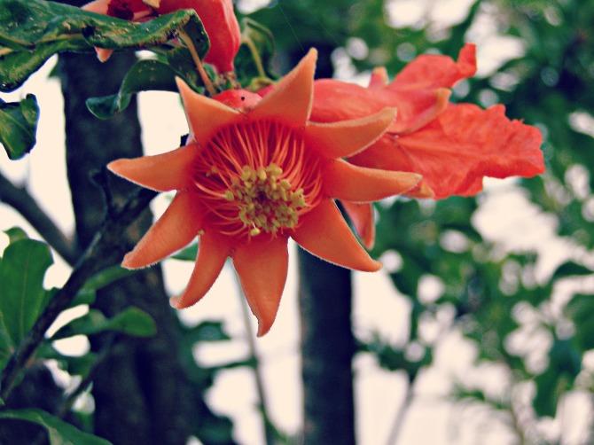 Still with Flower