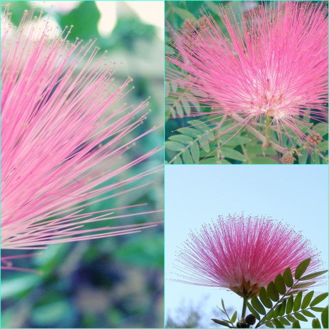 Pink Edges